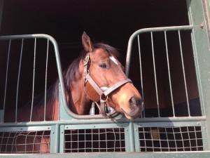 2015.1.27 競走馬のふるさと南九州案内所 (7)